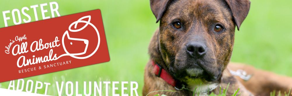 Jake Develops New Brand, Website and Social Media Campaign for Animal Rescue Group